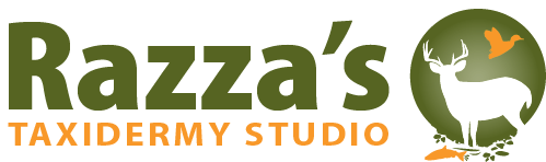 Razza's Taxidermy Studio