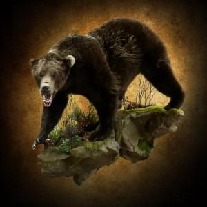 bear20160226 183609