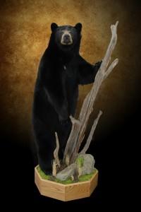 bear  cat 018