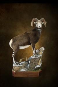 leapord,giraffe sheep thread 021