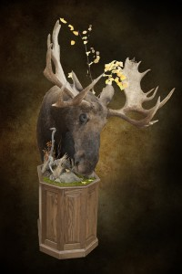 moose-lr